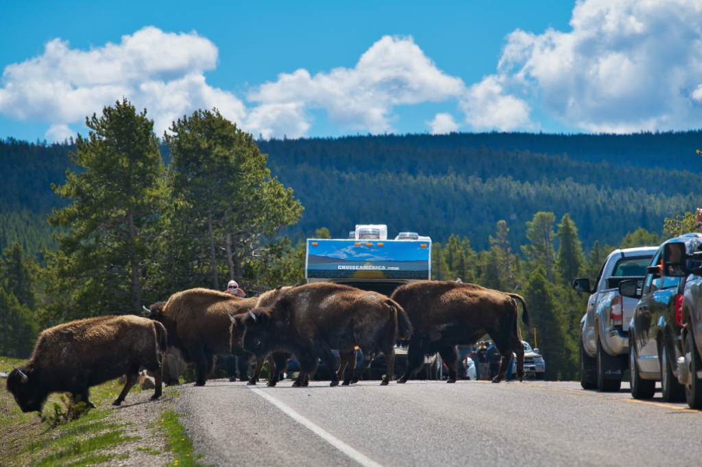 Cruise America camper bizons