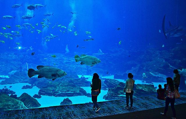 Atlanta aquarium Georgia