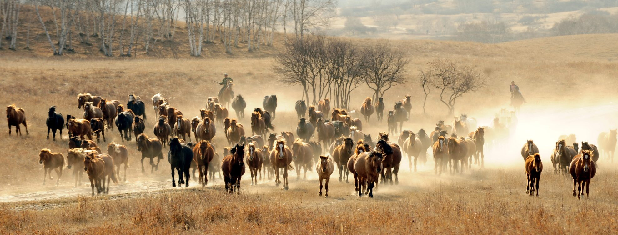 Prairie Amerika
